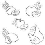 Vector drawing fruits Stock Photo