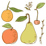 Vector drawing of fruits Royalty Free Stock Photo