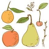 Vector drawing of fruits Royalty Free Stock Photo