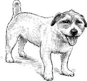 Sketch of a watching small dog royalty free illustration