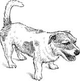 Sketch of a spotted lap dog. Vector drawing of a funny small dog vector illustration