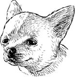 Sketch portrait of a funny lap dog. Vector drawing of the head of a cute small dog royalty free illustration