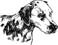 Dalmatian. Vector drawing of a head dalmatian stock illustration