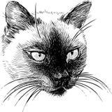 Sketch portrait of a siamese cat vector illustration