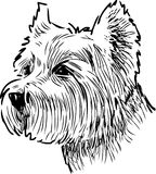 Sketch portrait of a scottish terrier. Vector drawing of the head of a lap dog royalty free illustration
