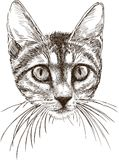 Sketch portrait of a small kitten Royalty Free Stock Photography