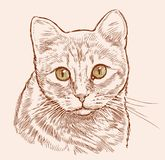 Sketch portrait of a house cat Royalty Free Stock Photo