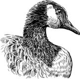 Head of goose Royalty Free Stock Images