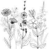 Vector drawing herbs