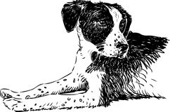 Cute dog. Vector drawing of a homeless dog vector illustration