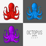 Vector drawing illustration of octopus with curling tentacles Royalty Free Stock Photos