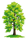 Vector drawing of linden Royalty Free Stock Photos