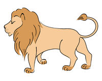 Vector drawing Lion. Stock Photo