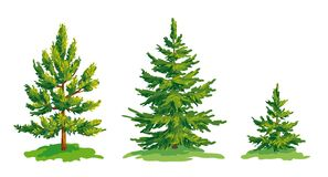 Vector drawing of little pine tree and two fir trees. EPS8 Royalty Free Stock Photo