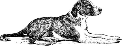 Lying dog. Vector drawing of a lying stray dog Stock Photos