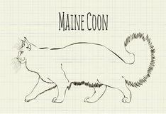 Vector drawing Maine Coon Stock Photo