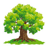 Vector drawing of oak Royalty Free Stock Image