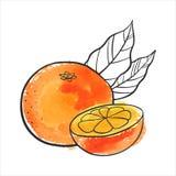 Vector drawing orange Royalty Free Stock Photo