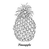 Vector drawing with outline Ananas or Pineapple fruit and leaf in black isolated on white background. Perennial tropical plant. Royalty Free Stock Photography