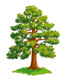 Vector drawing of pine tree Stock Images