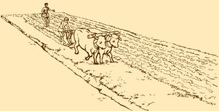 Vector drawing. Primitive agriculture. Peasants treated field Royalty Free Stock Photo