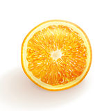 Vector drawing realistic orange Royalty Free Stock Photography