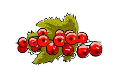 Branch red currant Royalty Free Stock Photography