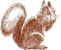 Sketch of a small squirrel Stock Photo
