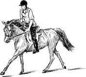 Equestrian. Vector drawing of the skipping equestrian royalty free illustration