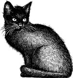 Sketch of a black kitten Royalty Free Stock Photos