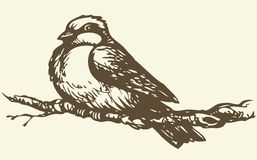 Vector drawing. Small titmouse on a branch Stock Images