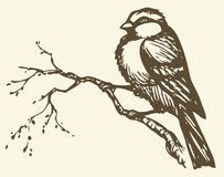 Vector drawing. Small titmouse on a branch. Vector drawing of series of monochrome sketches Birds. Tits, chickadees, and titmice constitute Paridae, a large Royalty Free Stock Photo