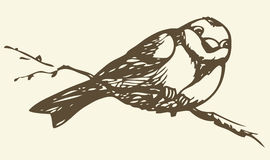 Vector drawing. Small titmouse on a branch Stock Photo