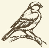 Vector drawing. Small titmouse on a branch Stock Image