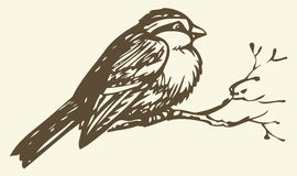 Vector drawing. Small titmouse on a branch Royalty Free Stock Images