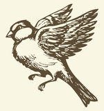 Vector drawing. Small titmouse in flight Royalty Free Stock Photography