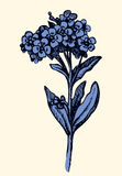 Vector drawing. Sprig of Forget-me-not. Sprig Myosotis arvensis Boraginaceae  on white background. Monochrome freehand outline ink hand drawn picture sketchy pen Royalty Free Stock Photography
