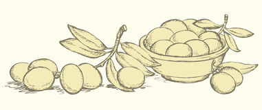 Vector drawing. Still life of bowl with fruits and olives sprigs. Vector monochrome line drawing style of antiquity engravings. Still life of bowl with fresh Stock Photo