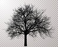Tree 2054 Royalty Free Stock Images