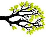 Vector drawing of the tree Royalty Free Stock Photography
