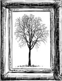 Vector image of a tree sketch in an old frame royalty free illustration
