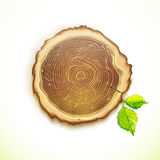 Vector drawing tree stump with leaves Royalty Free Stock Image