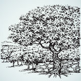 Vector drawing. Tree in Vineyard Stock Images