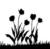 Vector drawing tulip Stock Image