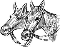 The heads of two horses Stock Image