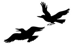 Vector drawing two ravens Stock Image