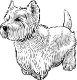 A scottish terrier in waiting. Vector drawing of a watching lap dog stock illustration