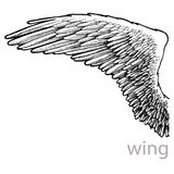 Vector drawing wing with feathers Stock Photography