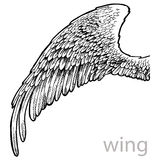 Vector drawing wing with feathers Royalty Free Stock Photography