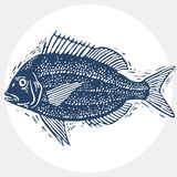Vector drawn freshwater fish silhouette, natural graphic symbol. Royalty Free Stock Image